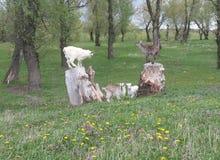 Goatlings on stumps Stock Photos