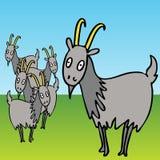 Goats stock illustration