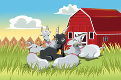 Goats. A vector illustration of a male goat surrounded by female goats in a farm Stock Photo