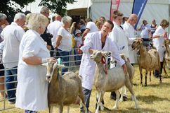 Goats  being Exhibited at Agricultural show Royalty Free Stock Images