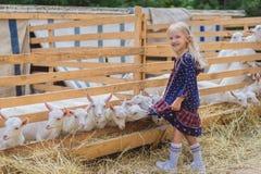 Goats biting kids dress at farm happy child. Looking at camera royalty free stock images