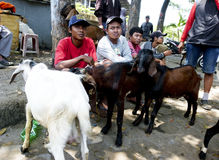 Goats. Breeder was selling goats for sacrifice during Eid al-Adha in the city of Solo, Central Java, Indonesia Stock Images