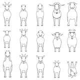 Goats breeds line art set. Various goats  line art set, domestic goats monochrome set on white royalty free illustration