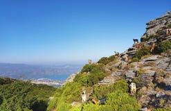 Goats and corsica cape. Goats climbing Serra di Pigno mountain in corsica island royalty free stock photos