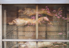 Goats cooking on spit Stock Image