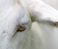 Goats Eye closeup Royalty Free Stock Photos