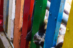 Goats and fence. These Goats and the fence Stock Image