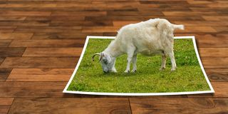 Goats, Goat, Grass, Cow Goat Family Royalty Free Stock Photo