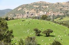 Goats grazing royalty free stock photos