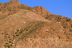 Goats in the hills Stock Photo
