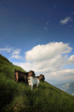 Goats on a mountain Royalty Free Stock Images