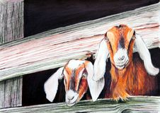 Goats Painting stock photo