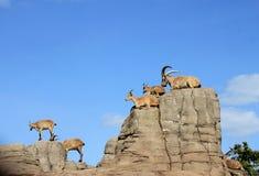 Goats on the rocks Stock Photos