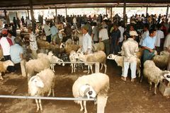 Goats and sheep market Royalty Free Stock Images
