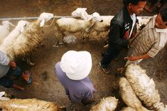 Goats and sheep market Stock Images