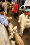 Goats and sheep market Royalty Free Stock Image