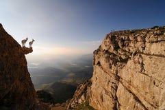 Goats stood on mountain ledge Stock Photos