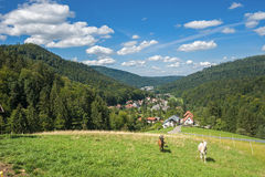 Goats in the upper Gaistal in Bad Herrenalb Royalty Free Stock Photo