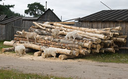 Goats on a woodpile Royalty Free Stock Photos