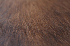 Goatskin background. Brown goatskin background in macro Royalty Free Stock Photo