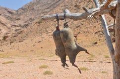 Goatskin, w którym roi się masło, w Socotra przechuje produkty i fotografia stock
