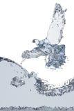 gołąb woda Zdjęcia Stock