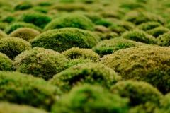 Gobbe dei licheni Immagine Stock Libera da Diritti