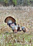 Gobble Gobble Royalty Free Stock Photography
