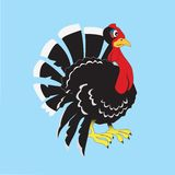 Gobbler Royalty Free Stock Photo