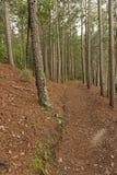 Gobernador Knowles State Forest, Wisconsin Fotografía de archivo libre de regalías