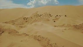 gobi αμμόλοφων ερήμων άμμος Τοπικός βλαστός κηφήνων απόθεμα βίντεο