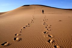 Gobi desert Stock Photography
