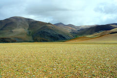 The Gobi of tibet Stock Photography