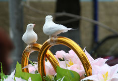 gołębie maszyny poślubić Obrazy Royalty Free