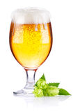 Goblet with fresh beer and leaves hop Stock Photos