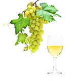 Goblet with wine and grapevine Stock Photo