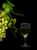 Goblet with wine and grapevine Stock Images