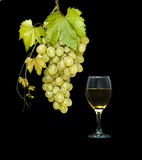 Goblet with wine and grapevine Royalty Free Stock Photo