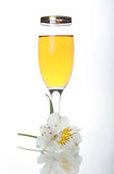 Goblet with wine and white orchid Stock Image