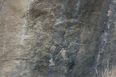 Gobustan stone with cow. Gobustan stone, rock and wall drawing of animal, bull or a cow Royalty Free Stock Photography