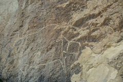 Gobustan stone with cow. Gobustan stone, rock and wall drawing of animal, bull or a cow Stock Photo