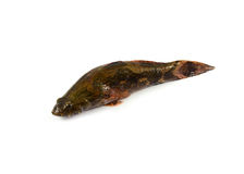 Goby fish Stock Photos