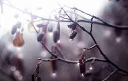 Gocce brillanti Fotografia Stock Libera da Diritti