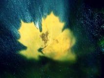 Gocce che lightpainting Le foglie di acero gialle mettono sulla pietra in fiume Immagini Stock Libere da Diritti