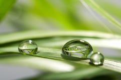 Gocce con erba verde Fotografia Stock