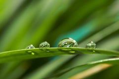 Gocce con erba verde immagini stock
