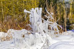 Gocce congelate di acqua sull'erba e dei cespugli con un sole luminoso di inverno Fotografia Stock