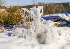 Gocce congelate di acqua sull'erba e dei cespugli con un sole luminoso di inverno Immagine Stock