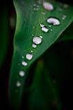 Gocce dell'acqua da pioggia Fotografie Stock