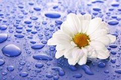 Gocce dell'acqua e del fiore fotografia stock